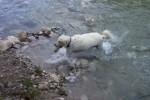 Flusssteine wollen gerettet werden...